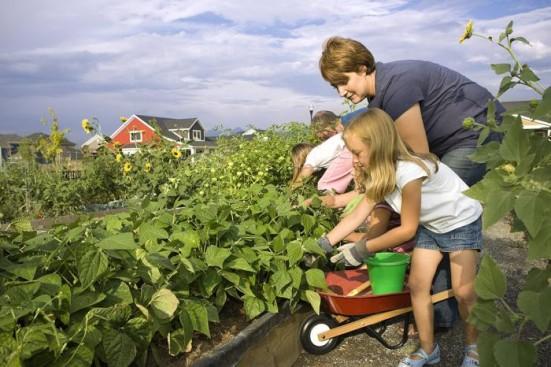 Новый закон о садоводческих товариществах 2017 года