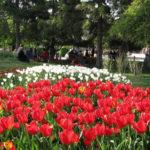 Май 2017 года: погода в России