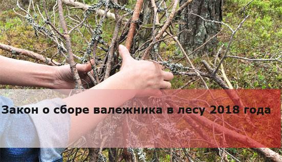 Закон о сборе валежника в лесу 2018 года