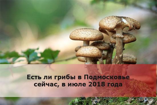 Есть ли грибы в Подмосковье сейчас, в июле 2018 года