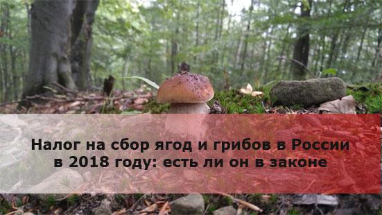 Налог на сбор ягод и грибов в России в 2018 году: есть ли он в законе