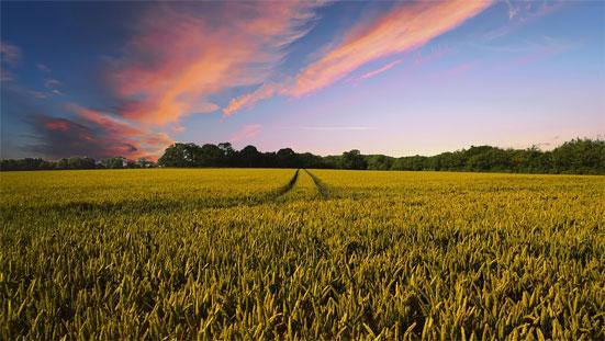 Обязательное межевание земельного участка до 2018 года: что говорит закон
