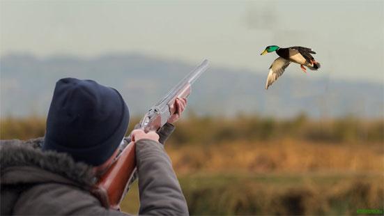 Общие правила для всех охотников