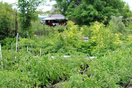 Прописка в садовом доме в 2019 году как прописаться