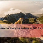 Правила выгула собак в 2019 году