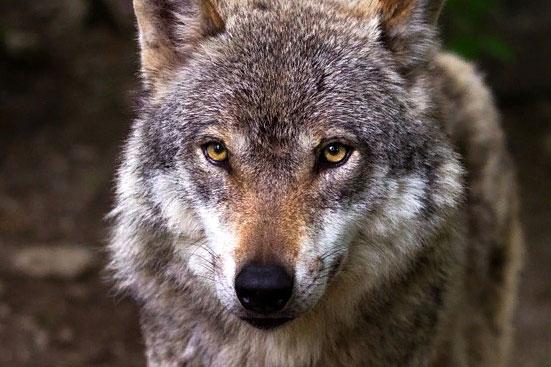 Список запрещенных к содержанию животных 2019